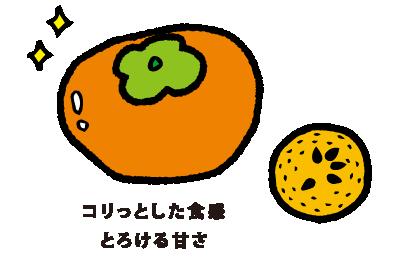 西村早生(にしむらわせ)コリっとした食感 とろける甘さ